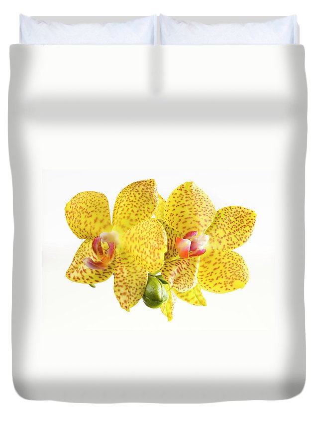 Thank You Duvet Cover featuring the photograph Beautiful Yellow Orchid On White by Digihelion