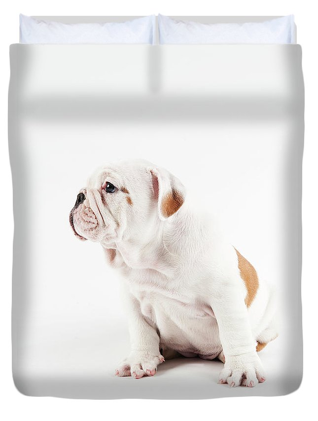 Pets Duvet Cover featuring the photograph Cute Bulldog Puppy On White Background by Peter M. Fisher