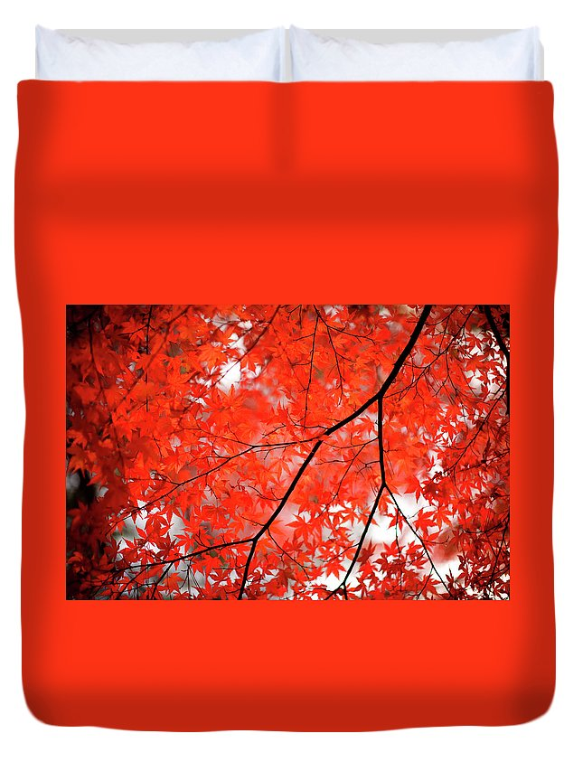 Tranquility Duvet Cover featuring the photograph Fall Colors In Japan by Jdphotography