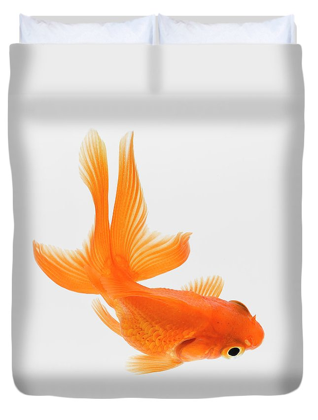 Pets Duvet Cover featuring the photograph Fantail Goldfish Carassius Auratus by Don Farrall