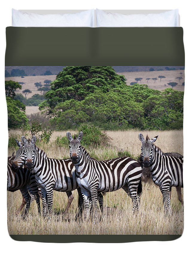 Scenics Duvet Cover featuring the photograph Grants Zebras, Kenya by Mint Images/ Art Wolfe