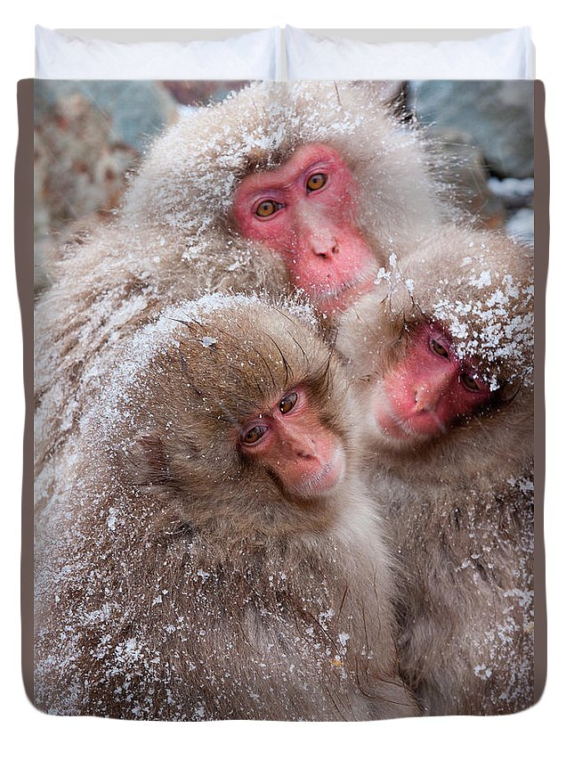 Vertebrate Duvet Cover featuring the photograph Japanese Macaques, Japanese Alps by Mint Images/ Art Wolfe