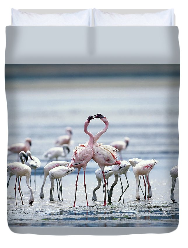 Tanzania Duvet Cover featuring the photograph Lesser Flamingoes Phoeniconaias Minor by Paul Souders
