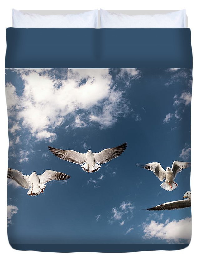Animal Themes Duvet Cover featuring the photograph Myanmar, Inle Lake, Seagulls Inflight by Martin Puddy