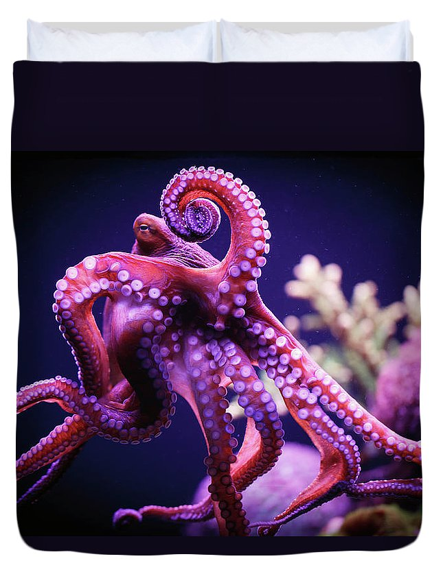 Underwater Duvet Cover featuring the photograph Octopus by Reynold Mainse / Design Pics