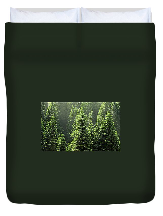 Scenics Duvet Cover featuring the photograph Pine Tree by Petekarici