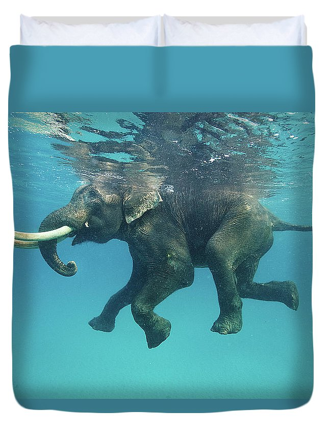 Underwater Duvet Cover featuring the photograph Swimming Elephant by Mike Korostelev Www.mkorostelev.com