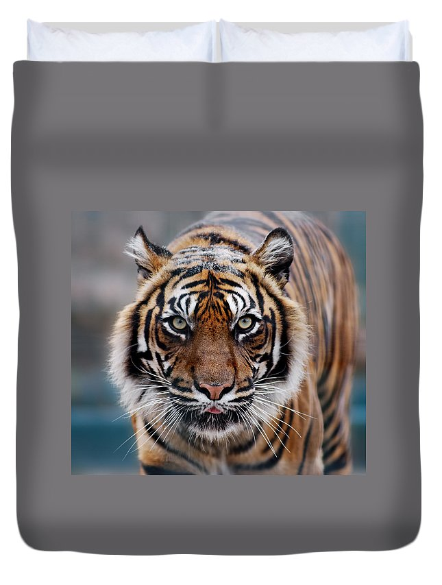 Snow Duvet Cover featuring the photograph Tiger by Freder