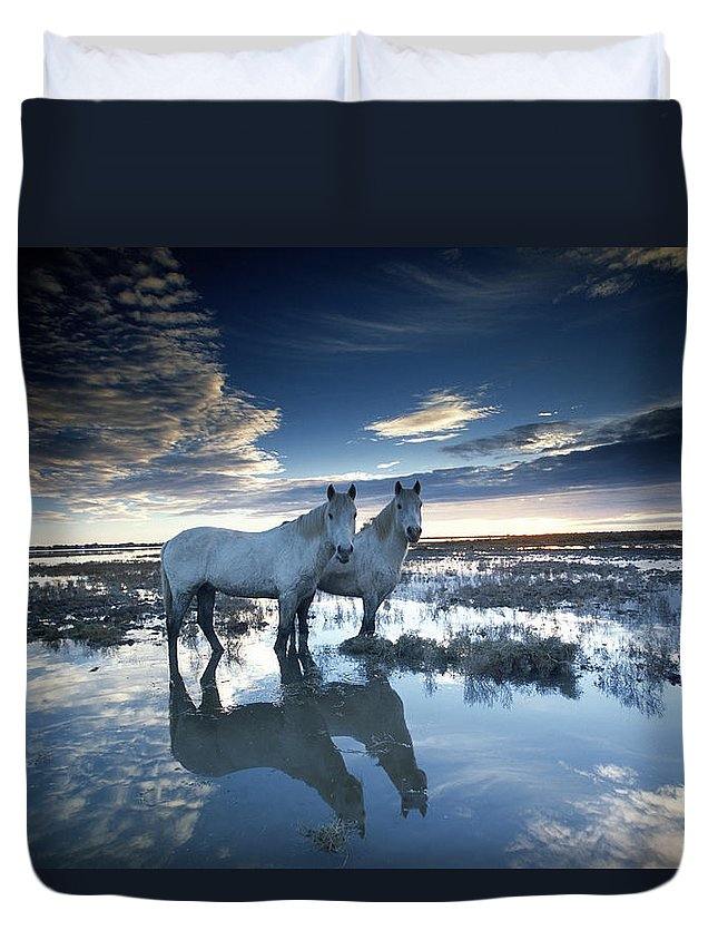 Horse Duvet Cover featuring the photograph Wild Horses Equus Caballus, France by Art Wolfe