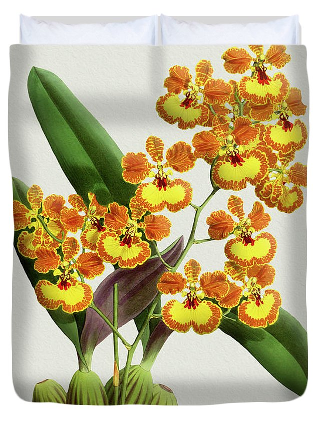 Vintage Duvet Cover featuring the drawing Orchid Vintage Print On Tinted Paperboard by Baptiste Posters