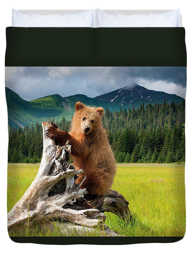Brown Bear Duvet Cover featuring the photograph Brown Bear, Lake Clark National Park by Mint Images/ Art Wolfe