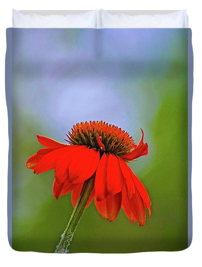 Lone Flower In Field Duvet Cover featuring the photograph Flower 2 by Gillis Cone