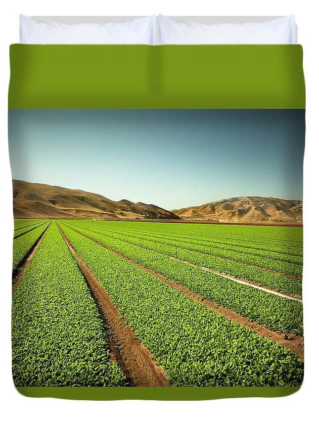 Environmental Conservation Duvet Cover featuring the photograph Crops Grow On Fertile Farm Land by Pgiam