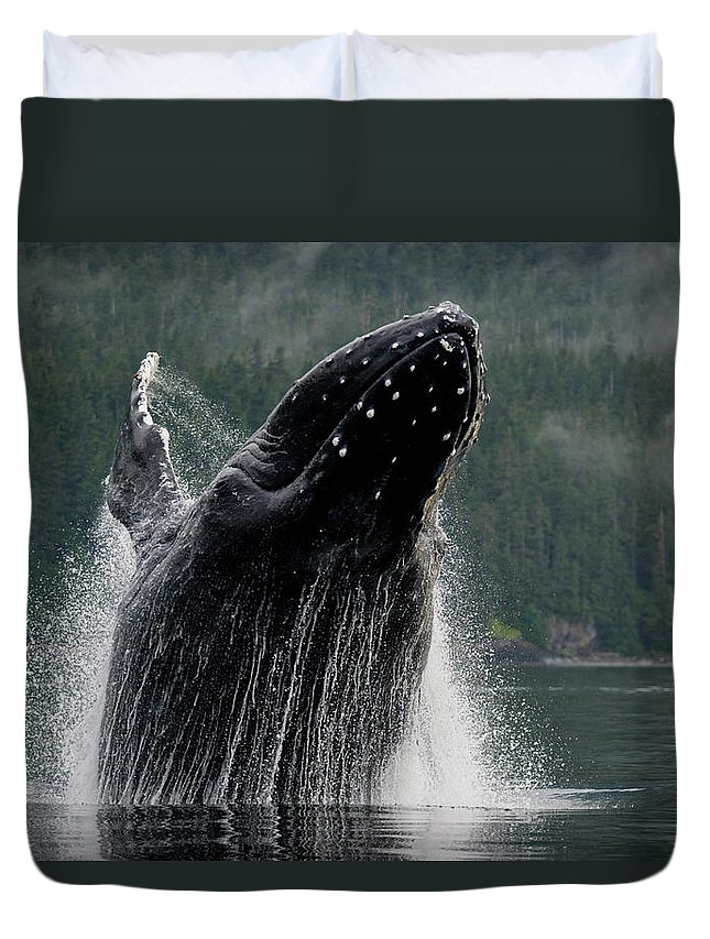 Animal Themes Duvet Cover featuring the photograph Breaching Humpback Whale, Alaska by Paul Souders