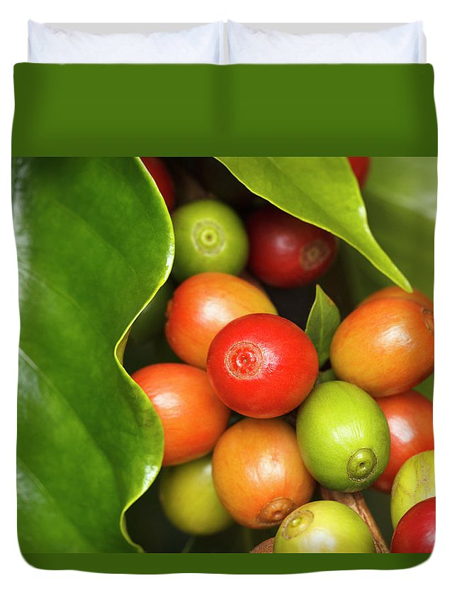 Outdoors Duvet Cover featuring the photograph Ripe Coffee Cherries by Dustypixel