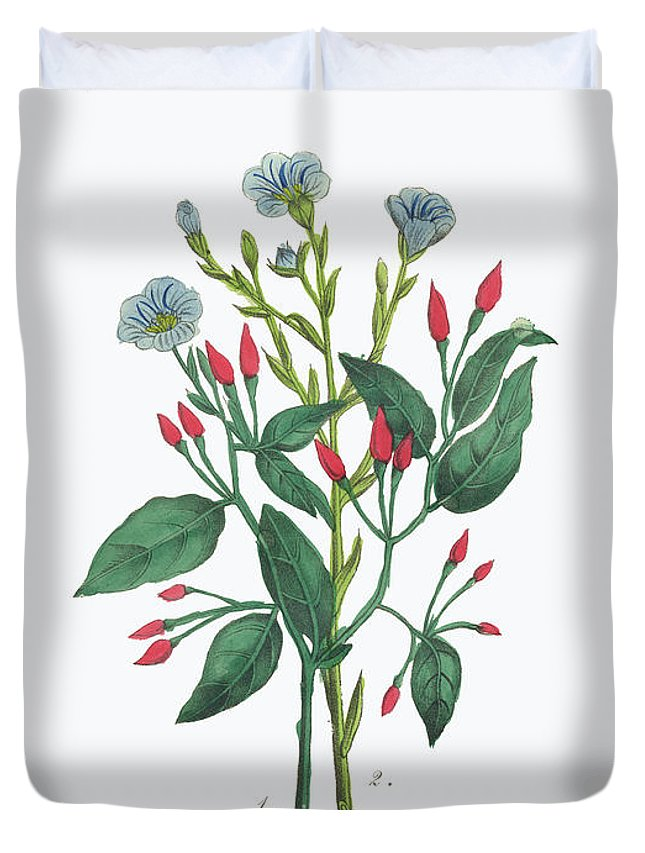 White Background Duvet Cover featuring the digital art Victorian Botanical Illustration Of by Bauhaus1000