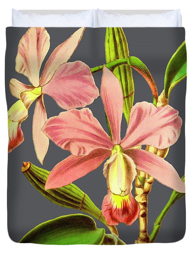 Vintage Duvet Cover featuring the digital art Orchid Old Print by Baptiste Posters