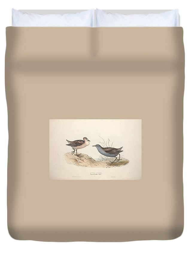 Nature Duvet Cover featuring the painting Different Types Of Birds Illustrated By Charles Dessalines D Orbigny 1806-1876 21 83 by Charles Dessalines D Orbigny