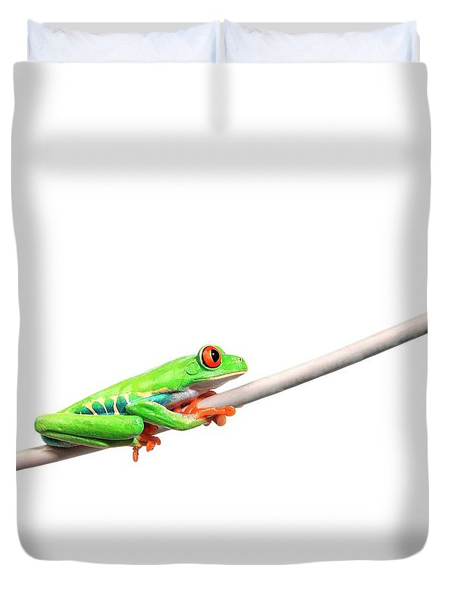 Rope Duvet Cover featuring the photograph A Frog Hanging On by Design Pics/corey Hochachka