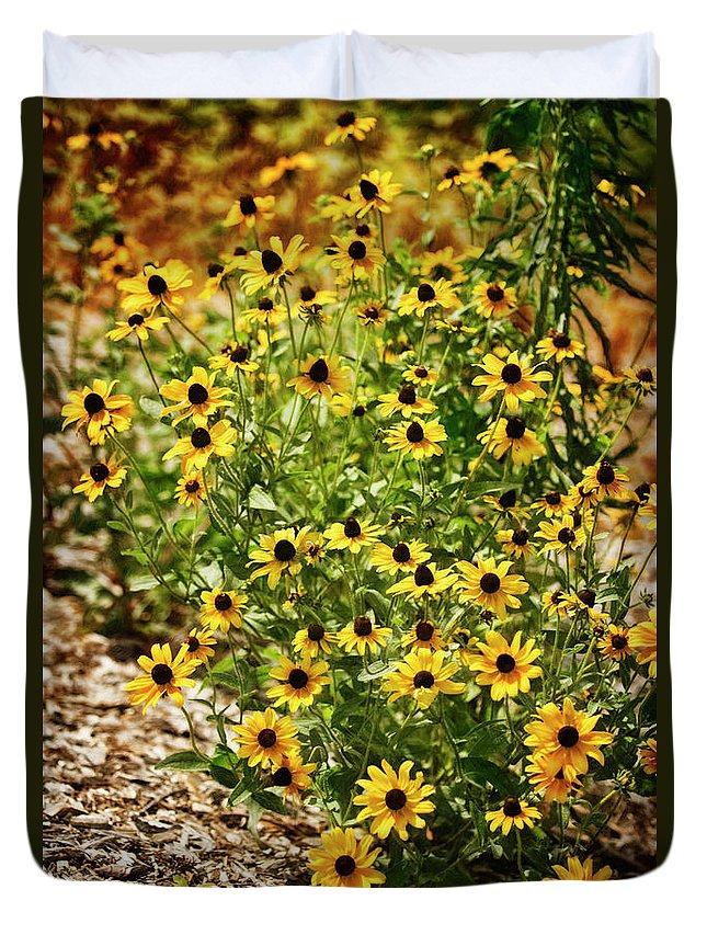 Rockville Duvet Cover featuring the photograph A Group Of Bossoming Black-eyed Susans by Maria Mosolova