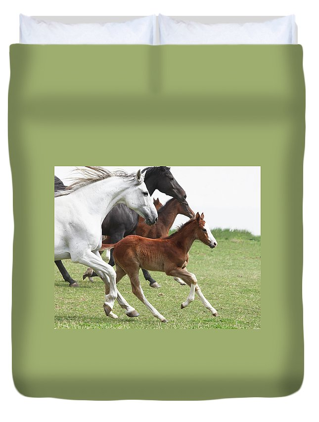 Horse Duvet Cover featuring the photograph A Group Of Galloping Horses In An Open by Somogyvari
