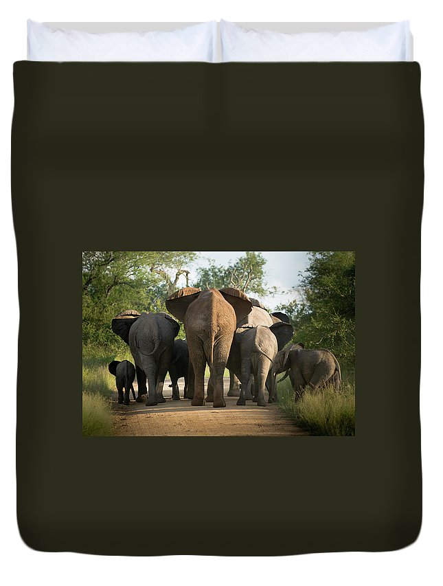 Cow Duvet Cover featuring the photograph A Herd Of Elephants Heading Away From Us by Jono0001