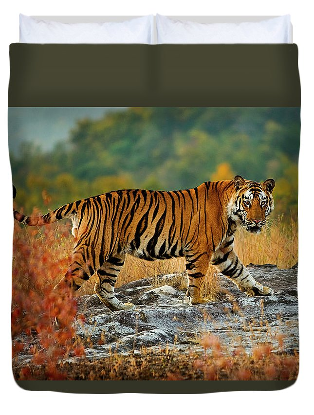 Vertebrate Duvet Cover featuring the photograph A Large Tiger In Bandhavgarh National by Mint Images - Art Wolfe