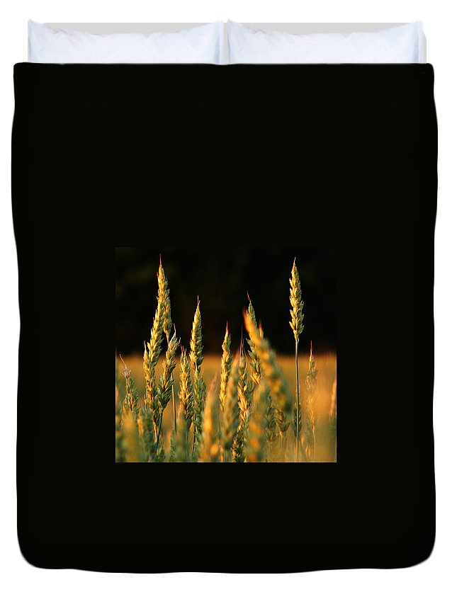 Bakery Duvet Cover featuring the photograph A Wheat Field Towards The End Of The Day by Ssuni