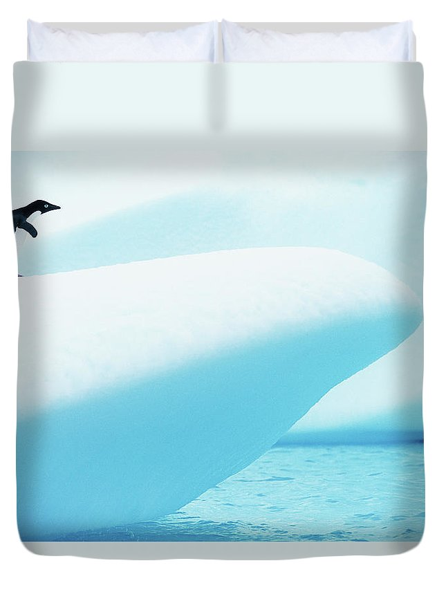 The End Duvet Cover featuring the photograph Adelie Penguin Pygoscelis Adeliae by Paul Souders