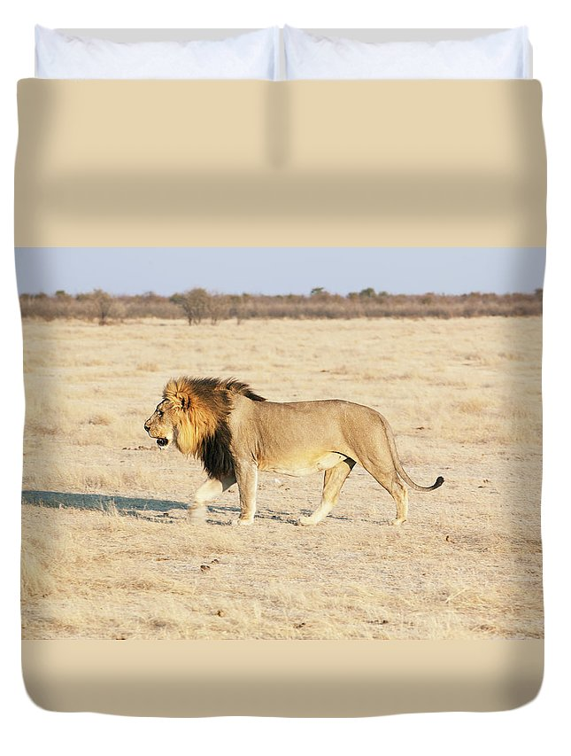 Animal Themes Duvet Cover featuring the photograph African Lion On Savannah by Bjarte Rettedal