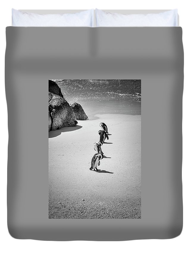 Water's Edge Duvet Cover featuring the photograph African Penguins Line Up by Read Also kirsteins Shutter Bug At Larskirstein.com