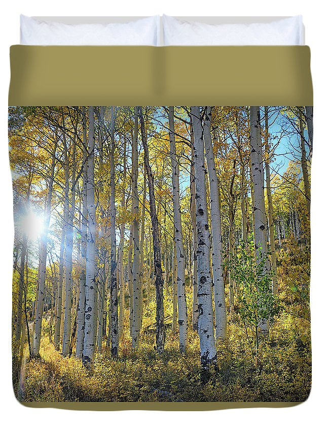 Aspens Duvet Cover featuring the photograph Afternoon Aspens by Brian Kerls