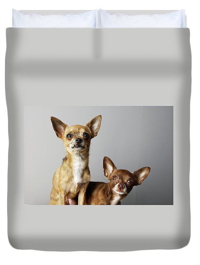 Animal Themes Duvet Cover featuring the photograph All Dog, No Cat by Laura Layera