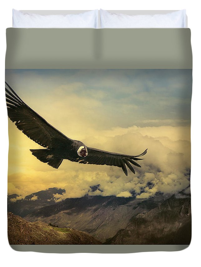 Animal Themes Duvet Cover featuring the photograph Andean Condor by Istvan Kadar Photography