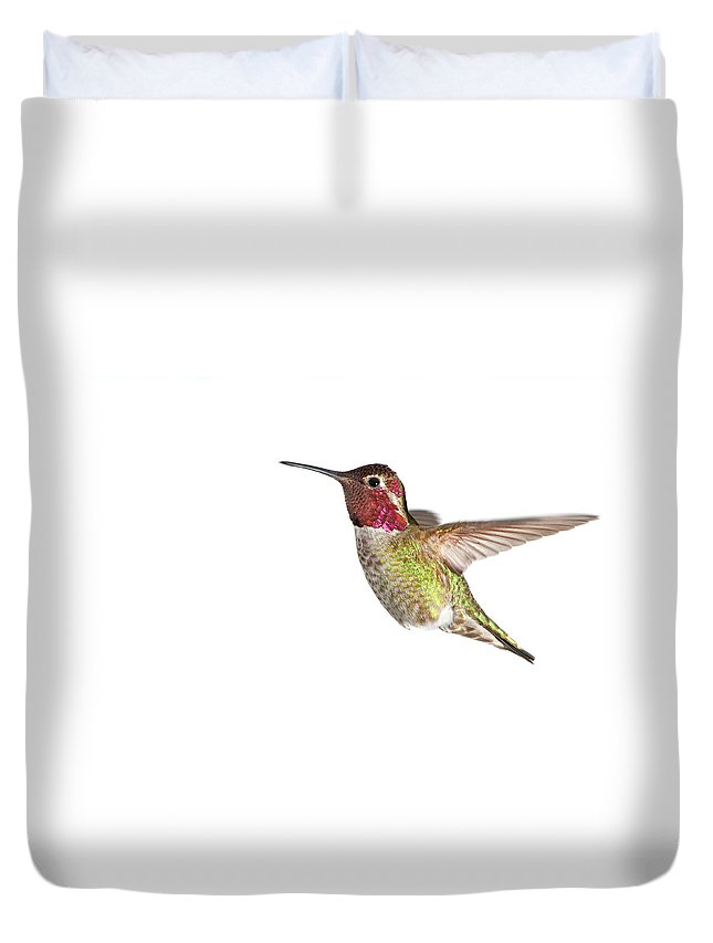 Hanging Duvet Cover featuring the photograph Annas Hummingbird - Male, White by Birdimages