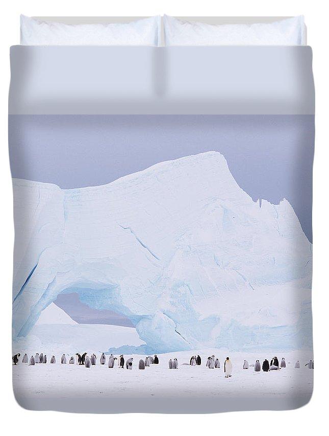 Emperor Penguin Duvet Cover featuring the photograph Antarctica, Emperor Penguin Aptenodytes by Joseph Van Os