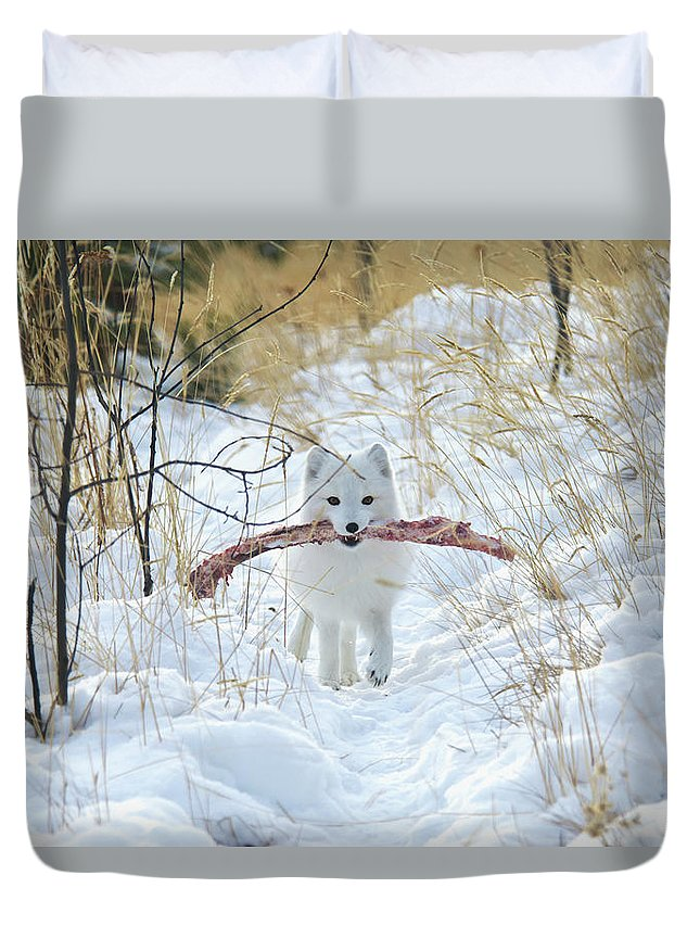 Grass Duvet Cover featuring the photograph Arctic Fox Alopex Lagopus In White by Mark Newman / Design Pics