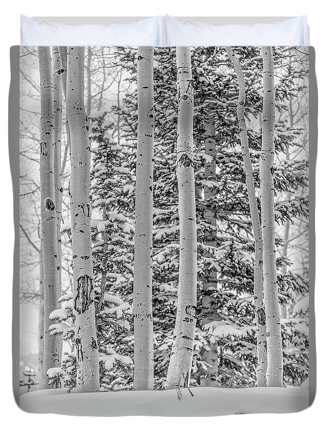 Tree Duvet Cover featuring the photograph Aspen Tree In Snow by Hyuntae Kim