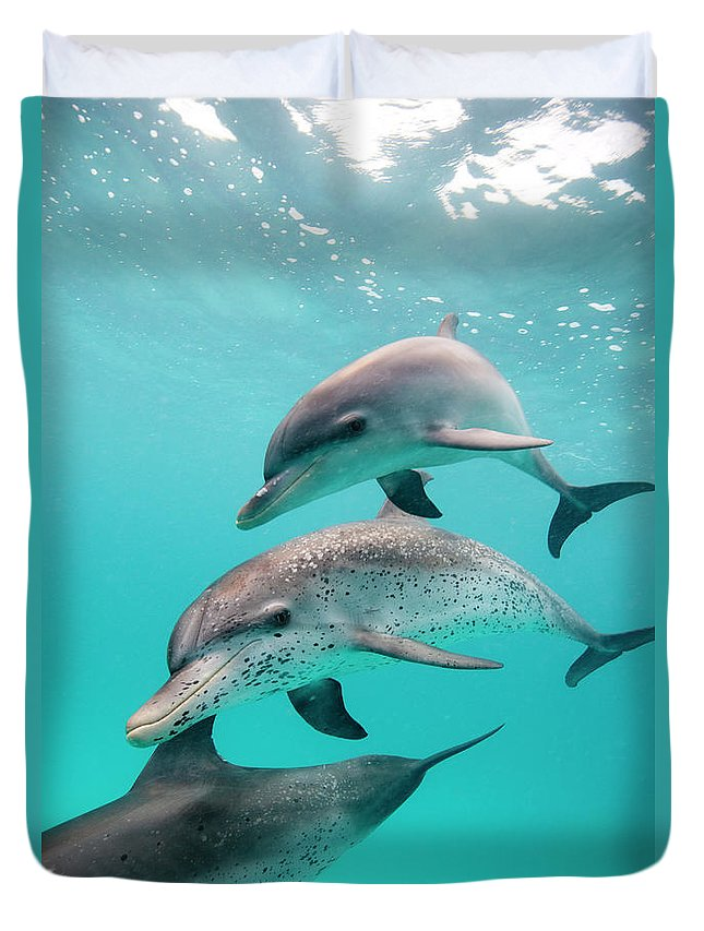 Underwater Duvet Cover featuring the photograph Atlantic Spotted Dolphin Stenella by Stephen Frink