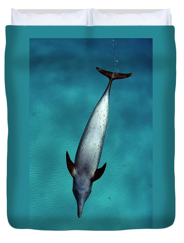 Animal Themes Duvet Cover featuring the photograph Atlantic Spotted Dolphin by Todd Mintz Www.tmintz.ca