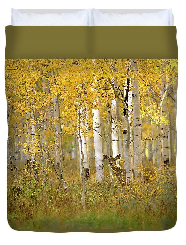 Vertebrate Duvet Cover featuring the photograph Autumn In Uinta National Forest. A Deer by Mint Images - David Schultz