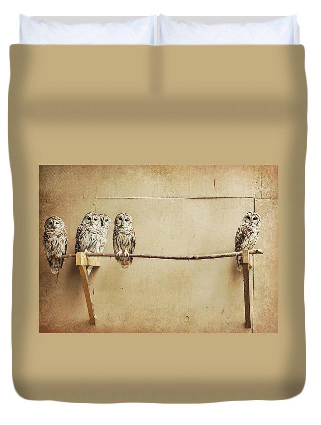Scranton Duvet Cover featuring the photograph Baby Barred Owls by Tara Reifenheiser