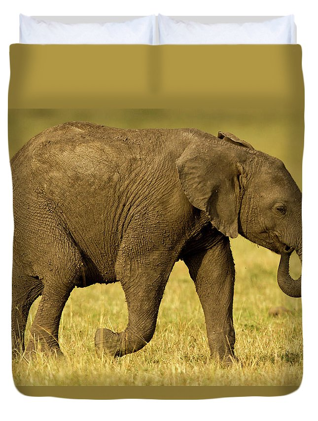Following Duvet Cover featuring the photograph Baby Elephant Following The Herd On The by Manoj Shah