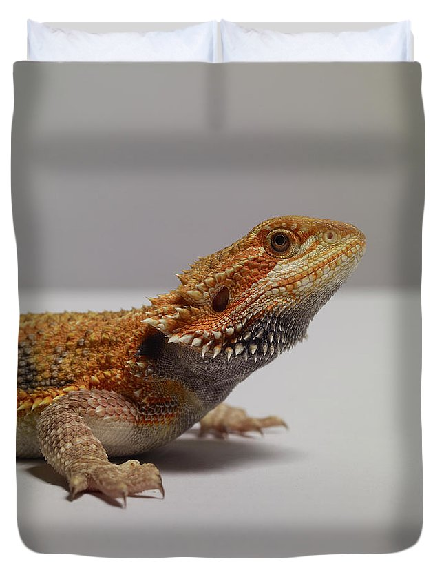 Alertness Duvet Cover featuring the photograph Bearded Dragon by Dan Burn-forti