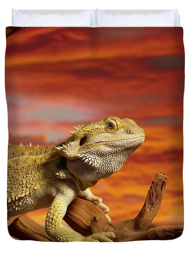 Pets Duvet Cover featuring the photograph Bearded Dragon Pogona Vitticeps On by Don Farrall