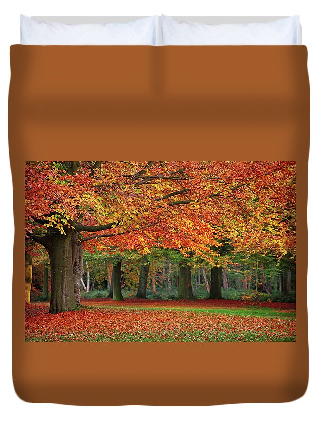 Orange Color Duvet Cover featuring the photograph Beautiful Autumn In Park by Lorado