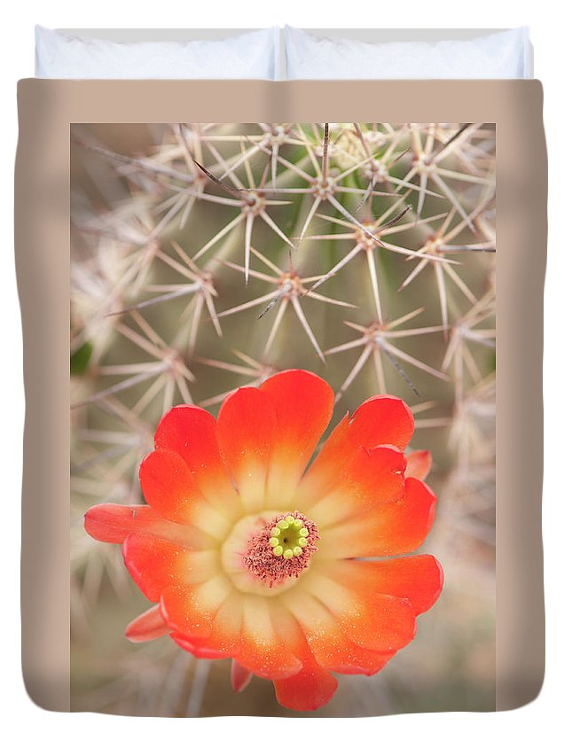 Orange Color Duvet Cover featuring the photograph Beautiful Claret Cup Hedgehog Blossoms by Lokibaho