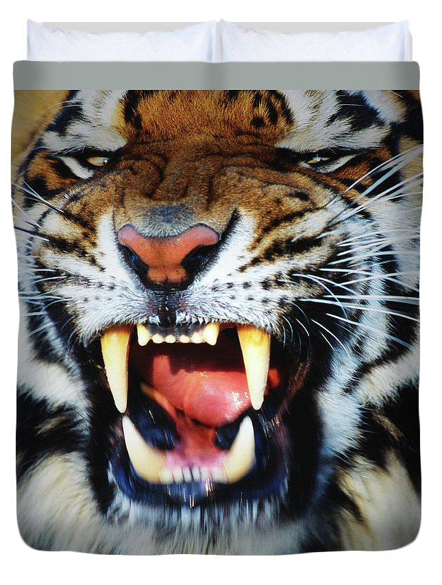 Snarling Duvet Cover featuring the photograph Bengal Tiger Panthera Tigris Tigris by Mike Hill
