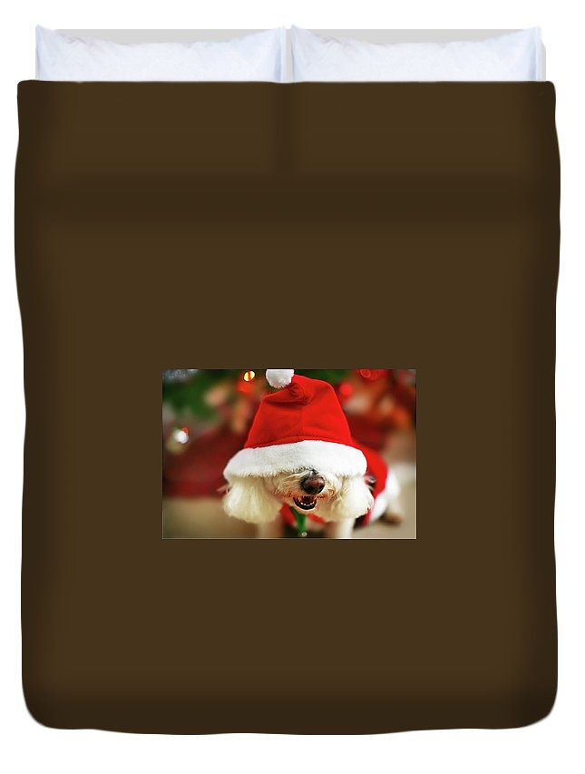 Pets Duvet Cover featuring the photograph Bichon Frise Dog In Santa Hat At by Nicole Kucera