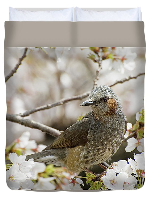 Alertness Duvet Cover featuring the photograph Bird Perched Among Cherry Blossoms by Philippe Widling / Design Pics